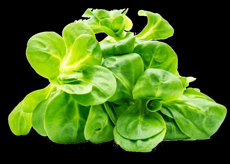 Streicher-Feldsalat-web