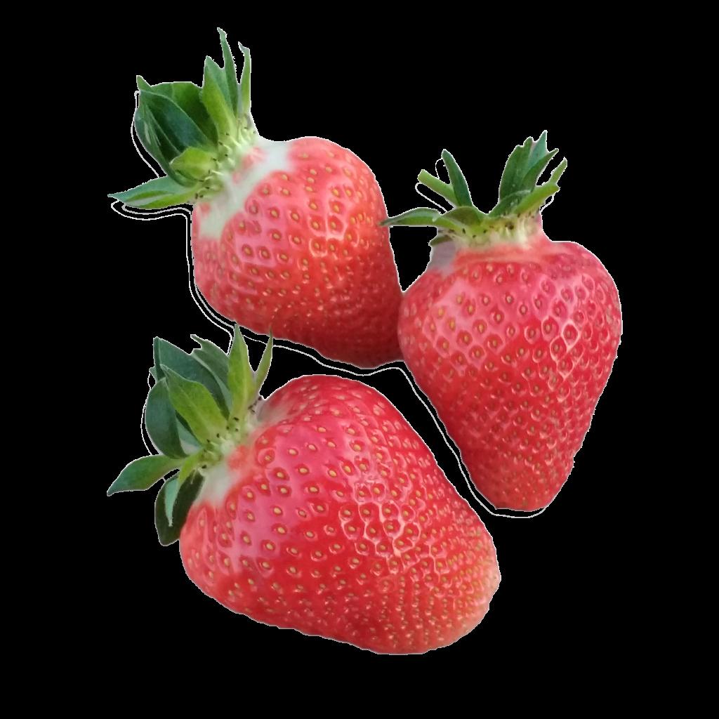 Erdbeeren-3-freigestellt-inkl-shatten_ohne-Rand
