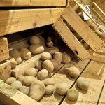Kartoffeln vom Linzgau-Bauer