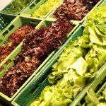 Salat von der Höri und Reichenau